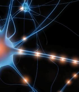 Unidad Didáctica. Viaje al Universo Neuronal