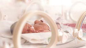 Daño cerebral en neonatos